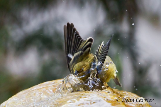 Bathtime 9