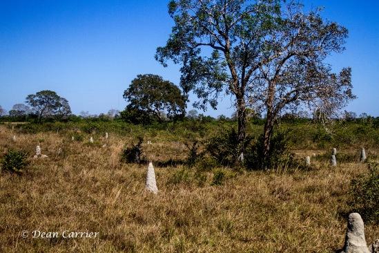 Termite Mounds 4